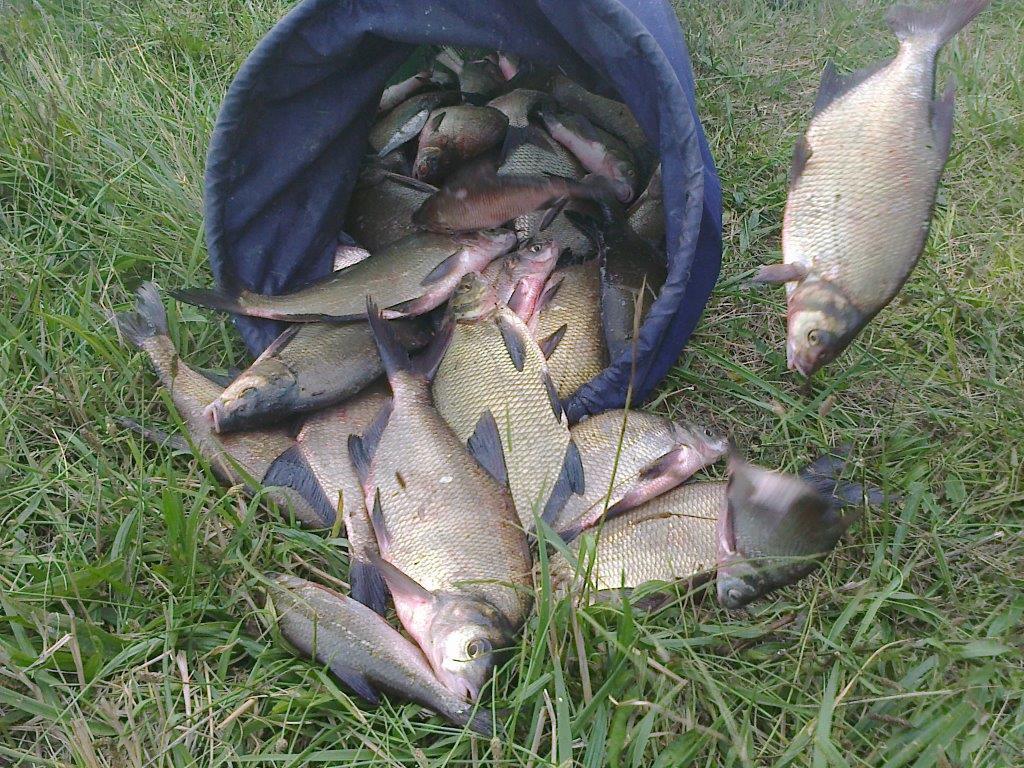 Belle pêche de brèmes pour J-J et Jackie 48 brèmes pour un peu plus de 40 kg en 5 heures de pêches