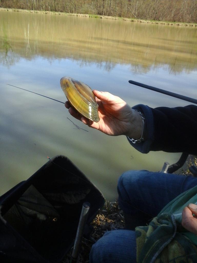 Jolie moule prise à l'étang de la Ciblière