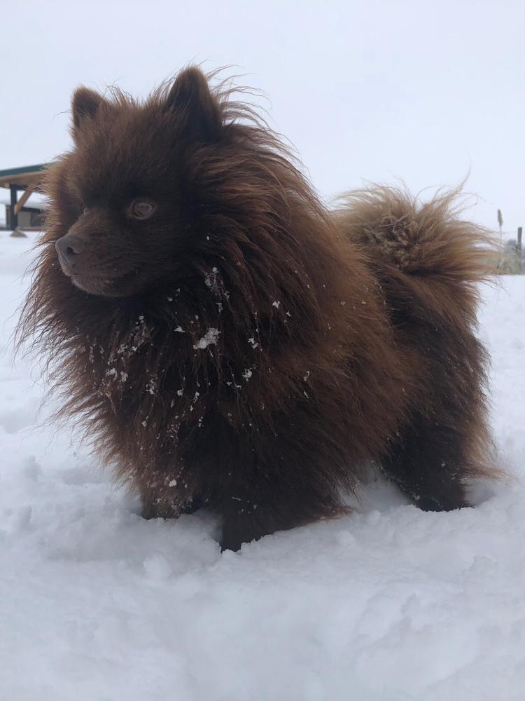 Alwin im Schnee