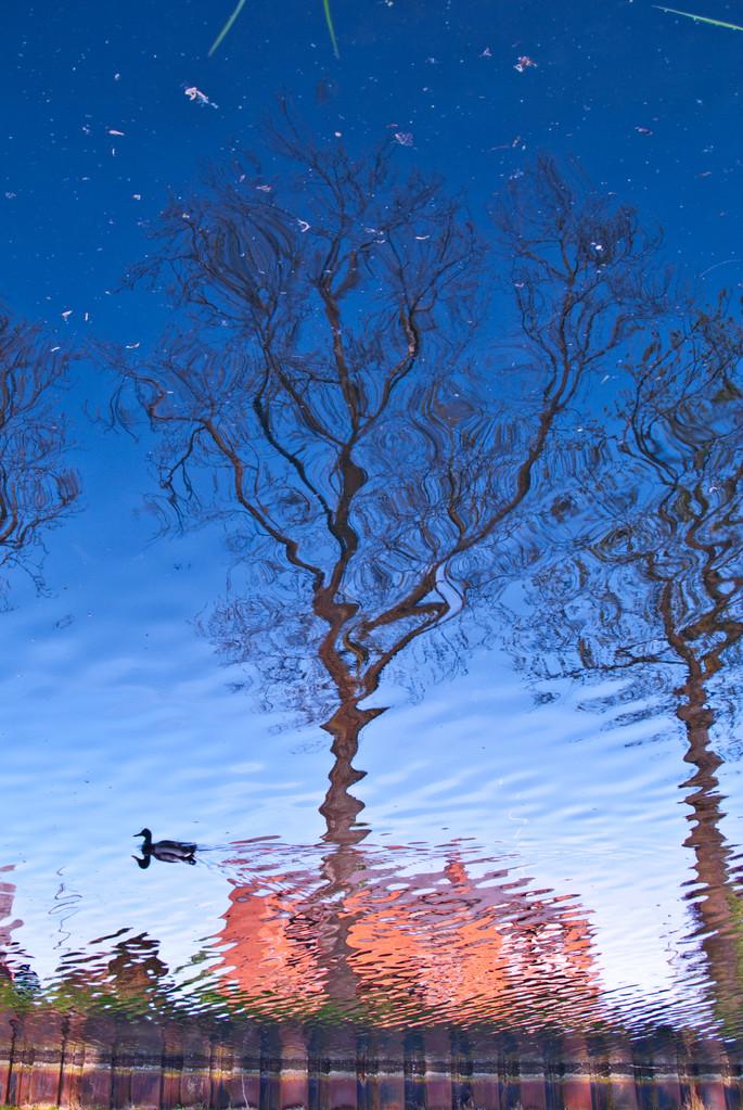 La Cantine des Italien. Reflets sur l'eau et art abstrait