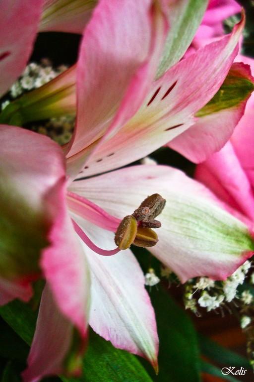fleur, une beauté parfaite