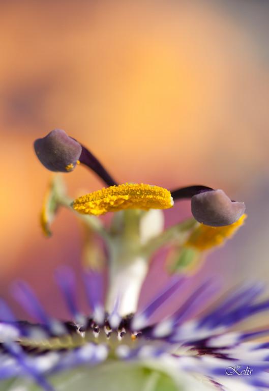 macro photo, la beauté du monde miniature