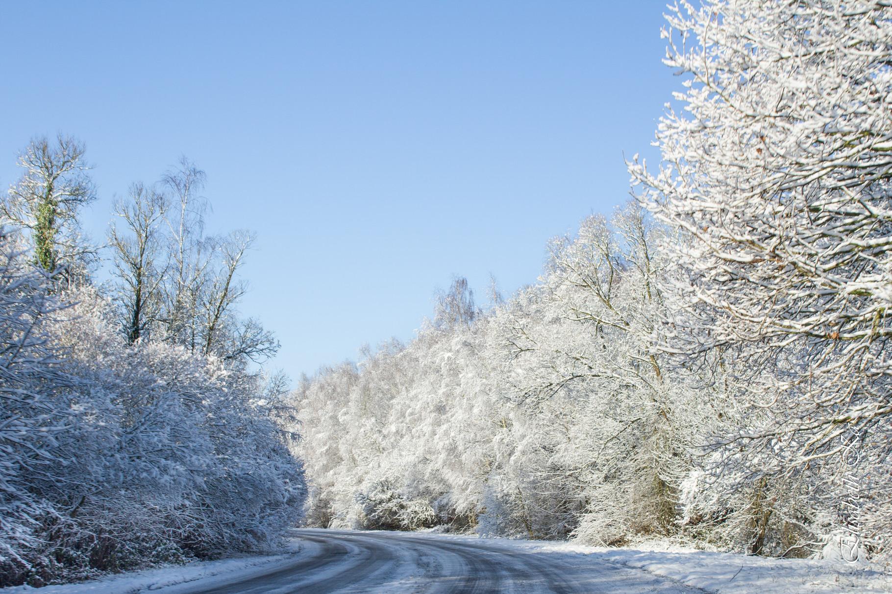 parc de Jumet en hiver