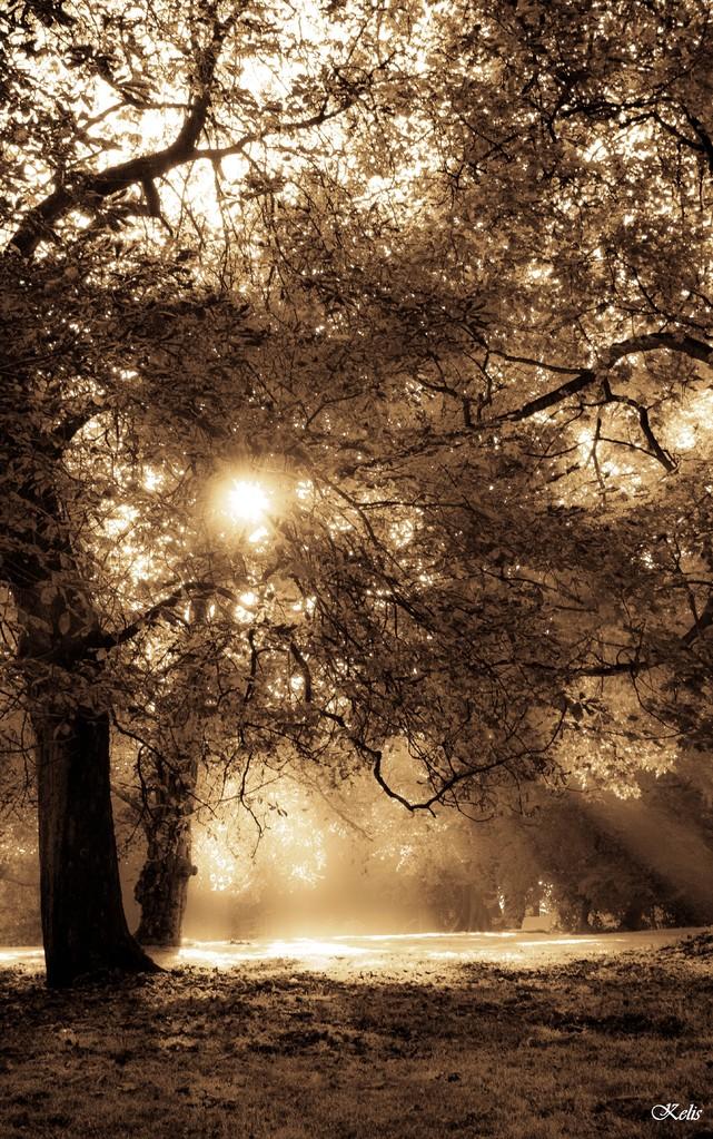 un arbre de lumière