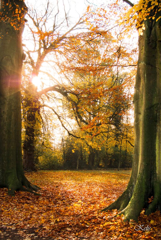 parc Bivort aux couleurs d'automne