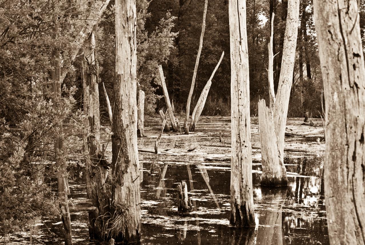 Les Marais d'Harchies. désolation
