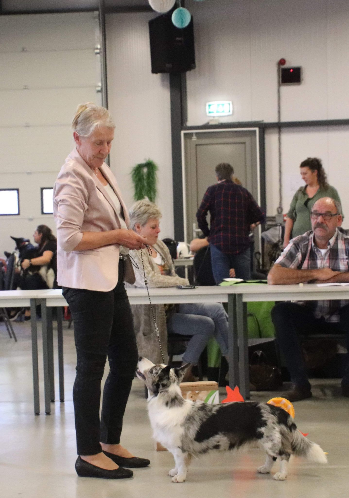 Welshclan's Maggy May with her owner Harma Muller, 1 ex in Open class