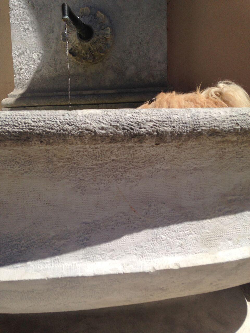 Ich sehe immer nur noch die Nasenspitze, wenn er im Brunnen badet.