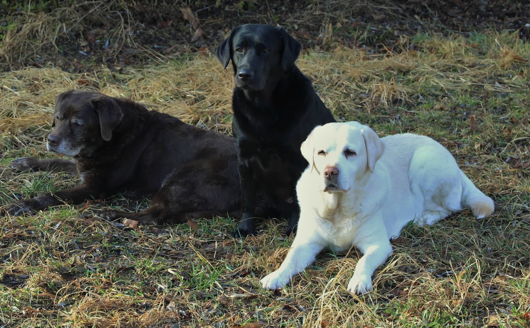 Unsere Drei auf Beobachtungsposten beim Apportieren