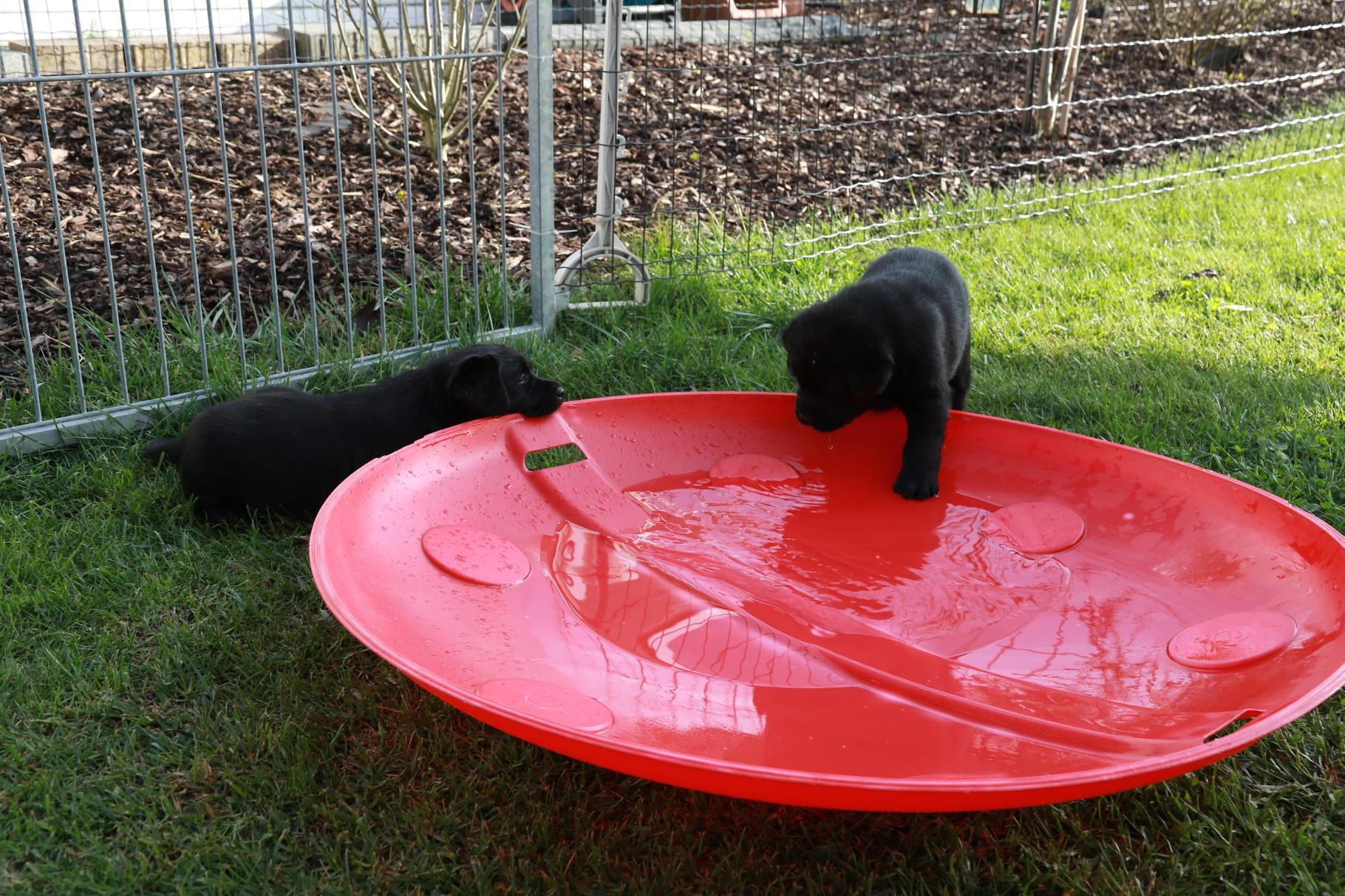 Der erste Kontakt mit Wasser