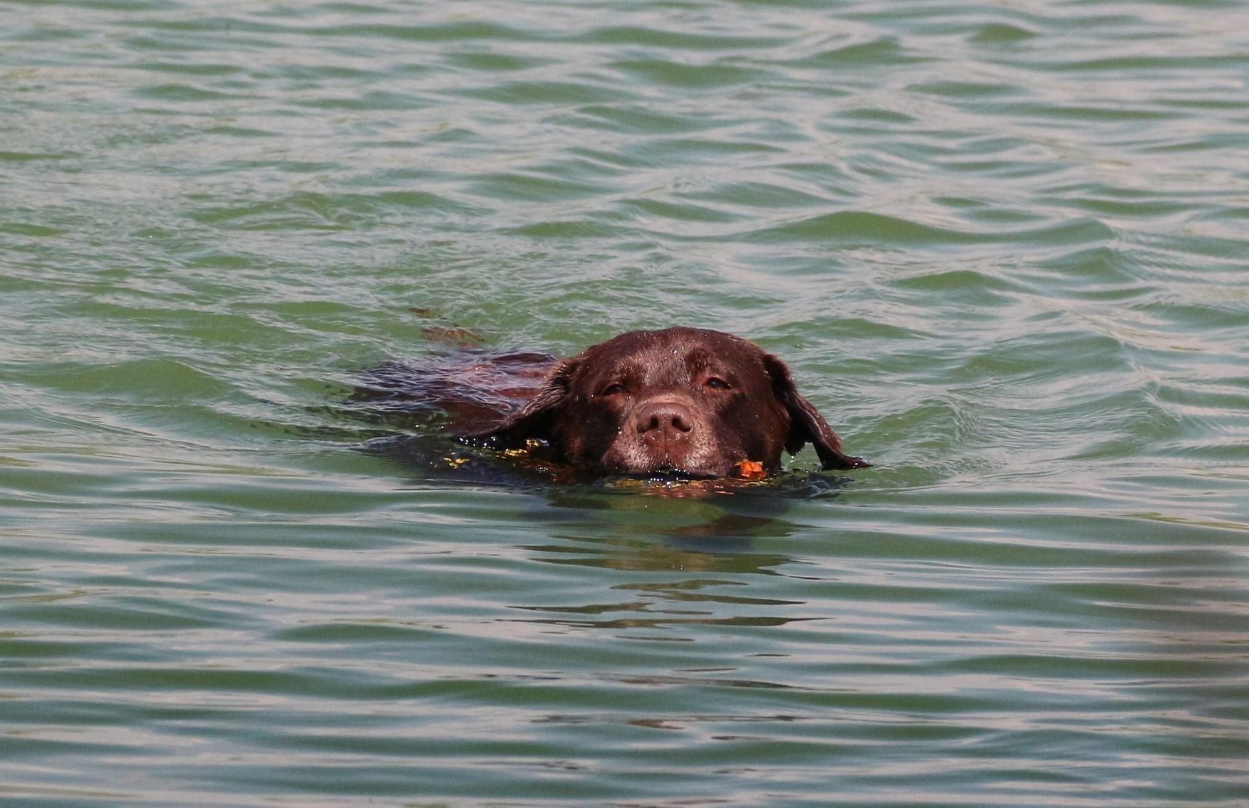 Auch aus dem Wasser werden die Dummys appotiert