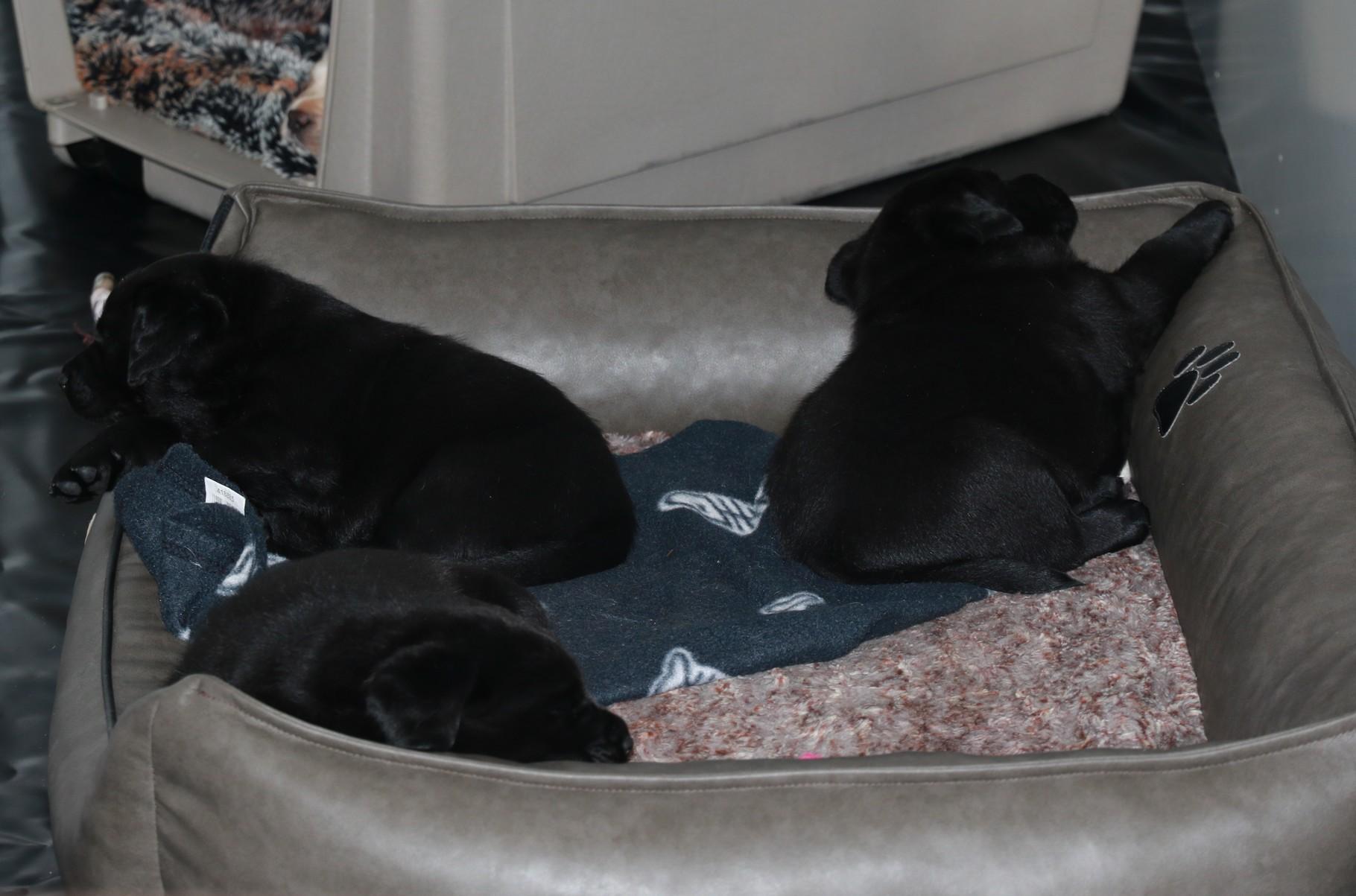In den Ecken haben sie schon immer gerne geschlafen
