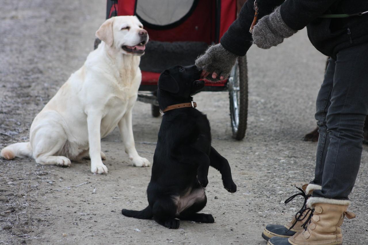 Auch fürs Dogdancing hat sie viel Talent