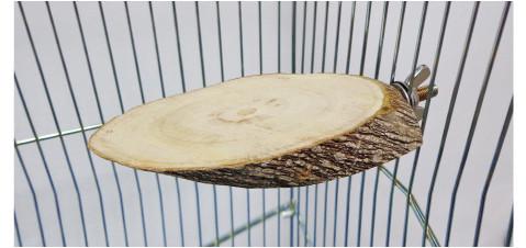 オリジナル 天然木 止まり木(テーブル型)楕円型