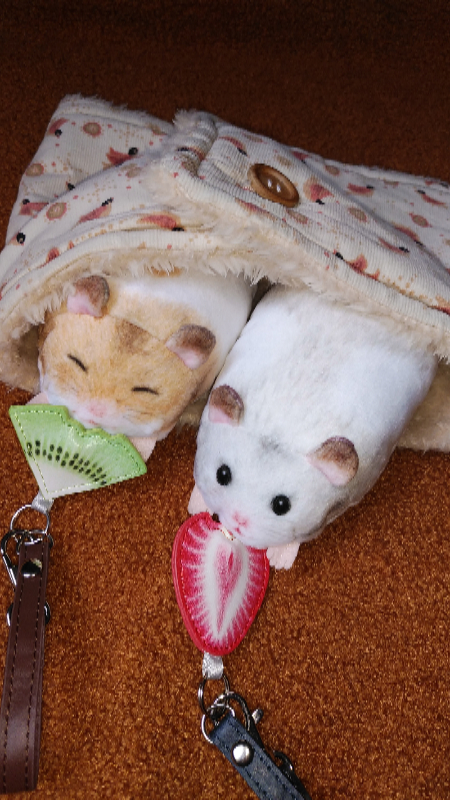 「あったかいねー」「本当だねー」家にハムちゃんがいたら入ってっきそうなくらい暖かいです。