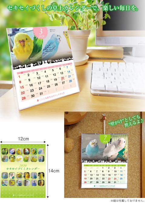 2020年 セキセイインコ卓上カレンダー セキセイインコ カレンダー