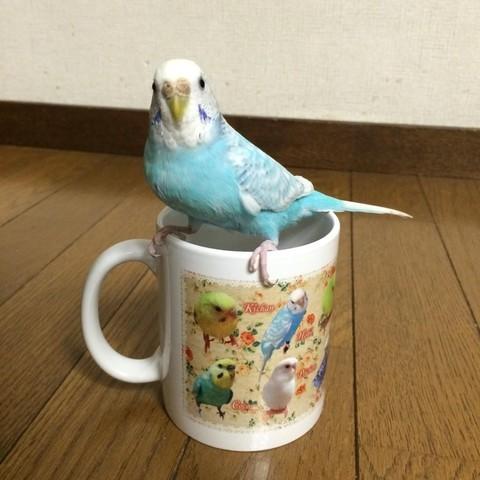 鳥づくしマグカップ 写真