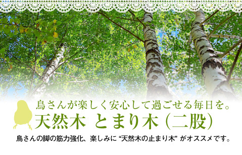 オリジナル 天然木 止まり木(二股)