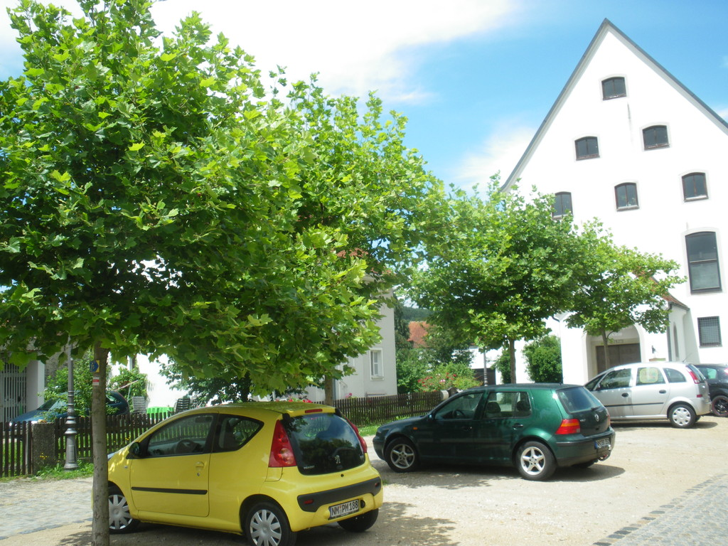 Baumpflanzung vor dem Pettenkoferhaus