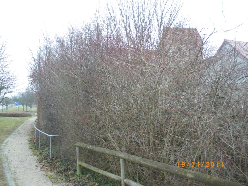 Stadtansicht durch Büsche und Bäume verdeckt ( Februar 2011