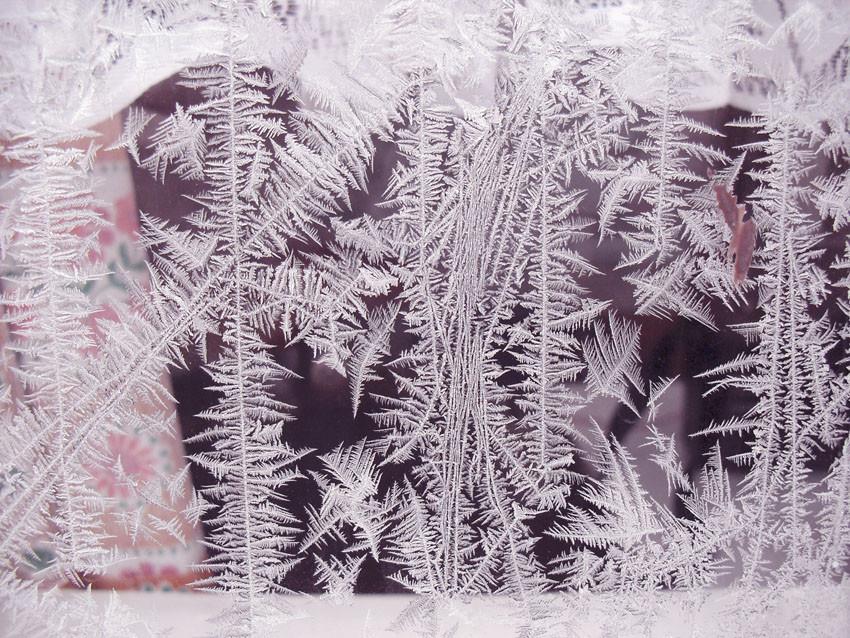 Eisblumen am 31.01.2010