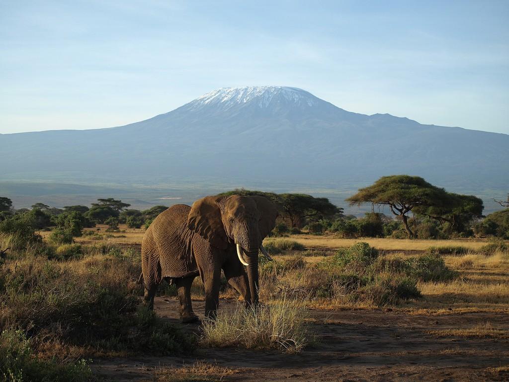 Kenya (Kilimandjaro)