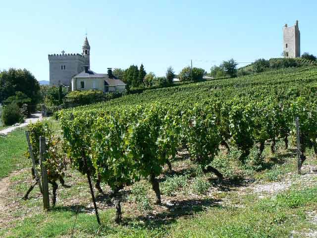 vin de Savoie, œnologie, Chignin