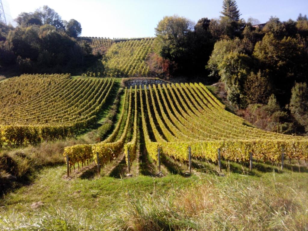 vin de Savoie, œnologie, tourisme oenologique