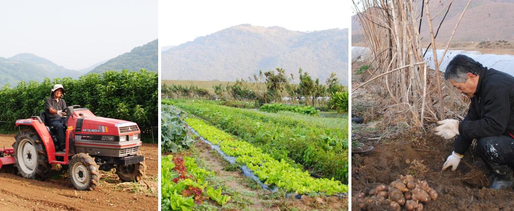 ミモレ農園で農作業をしています。左:トラクターで耕します。中:秋頃のミモレ農園。右:菊芋の収穫。
