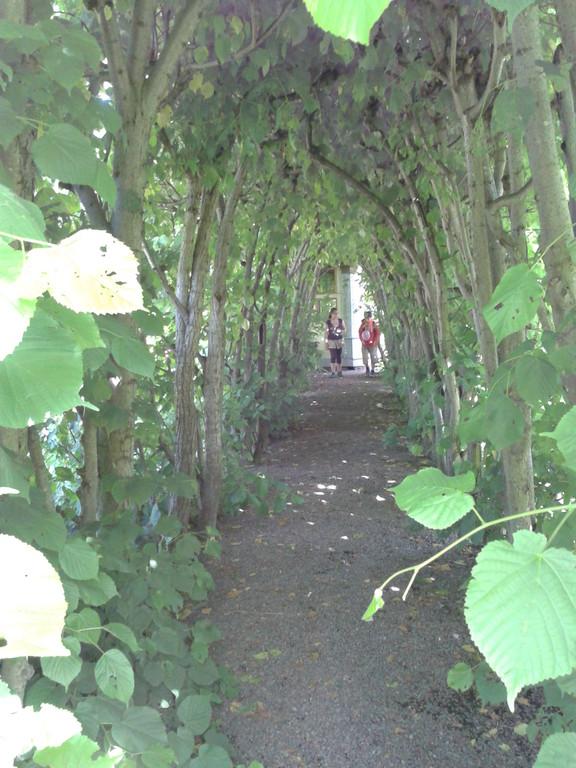 トトロが出てきそうな樹のトンネル