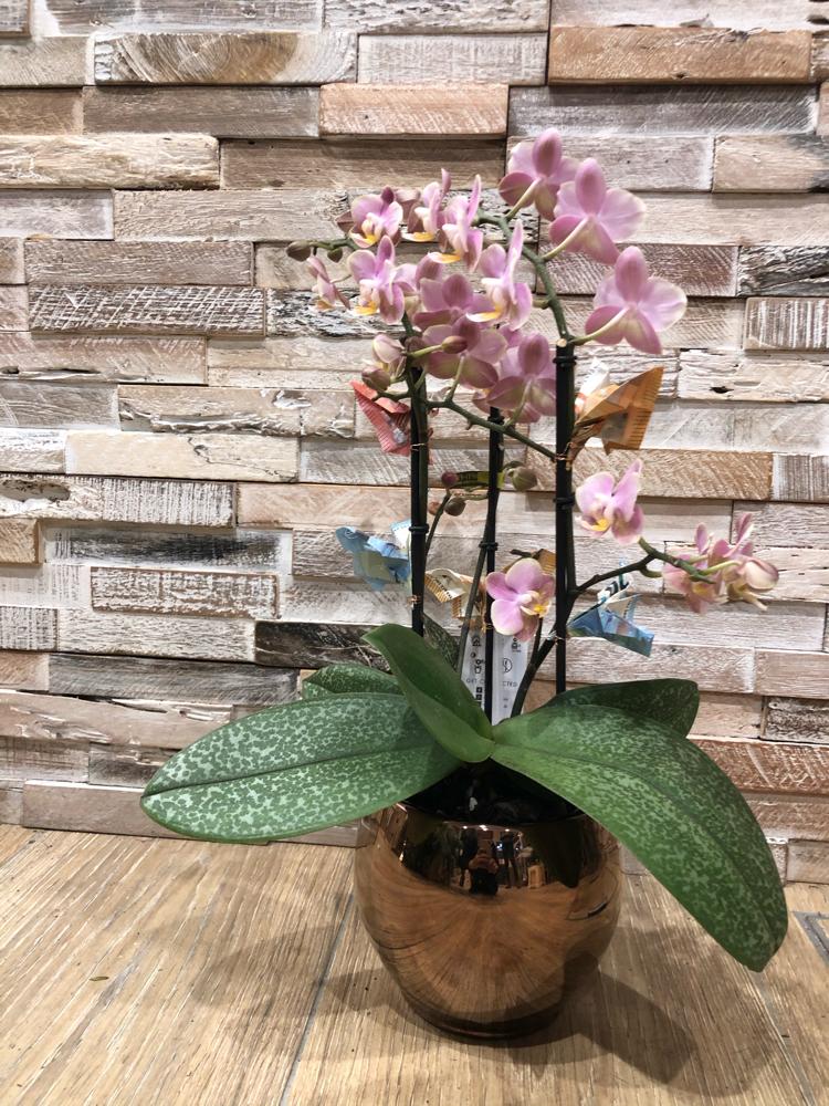 Orchideen mit Noten