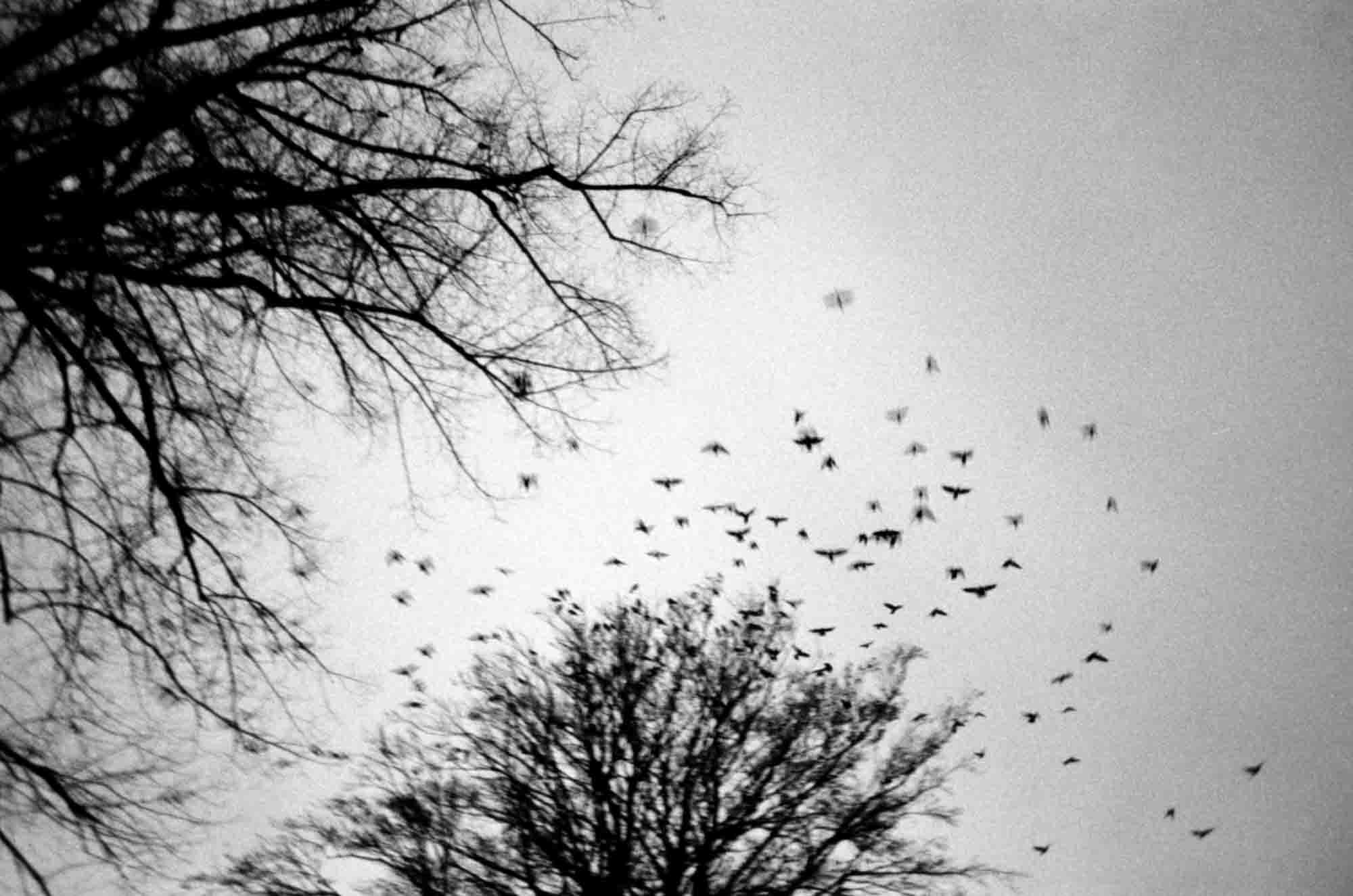 Wings. | Pentax ME Super | Kodak Tri-X EI 800