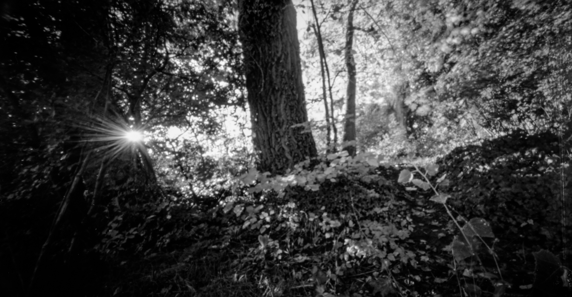 Pinhole photography with Holga 120 WPC