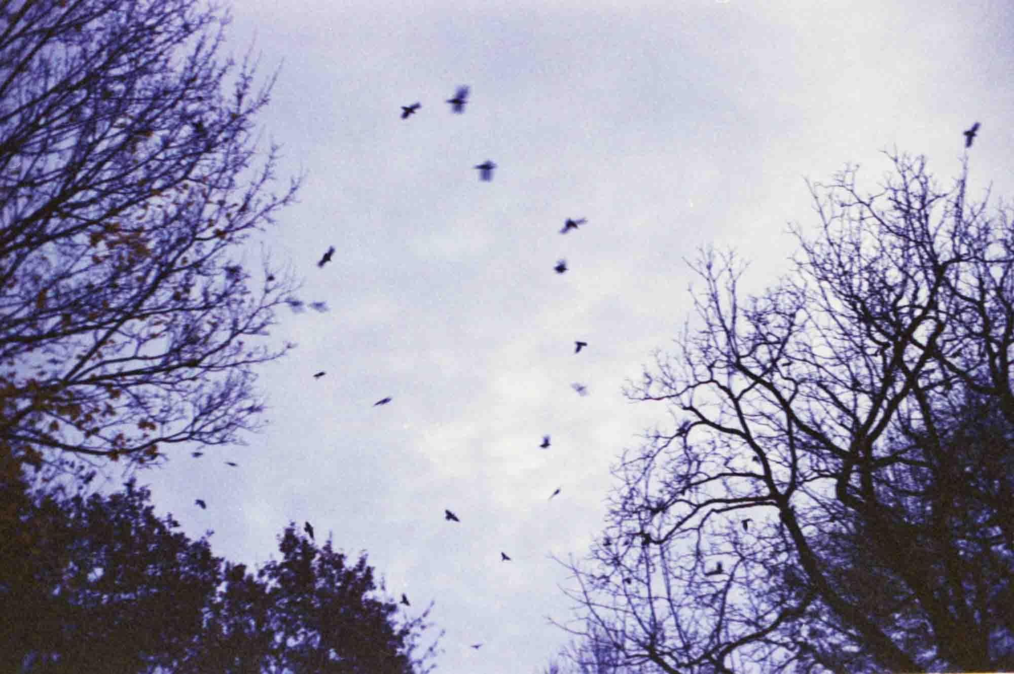 Flying birds | Pentax ME Super | Press Color 200 expired 10/2003