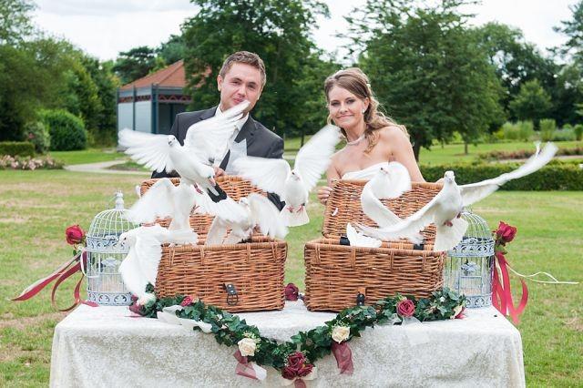 Hochzeitstauben.