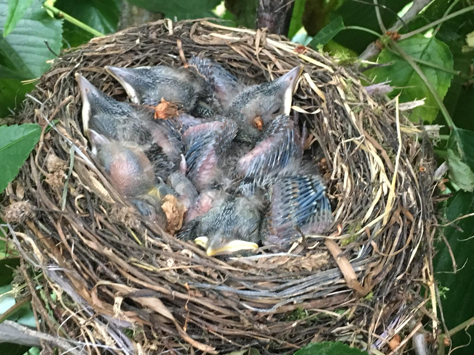 Die Natur ist schon erstaunlich, wie perfekt rund dieses Vogelnest ist. Die Vogelmutter hat das alles nur mit ihrem Schnabel gebaut.