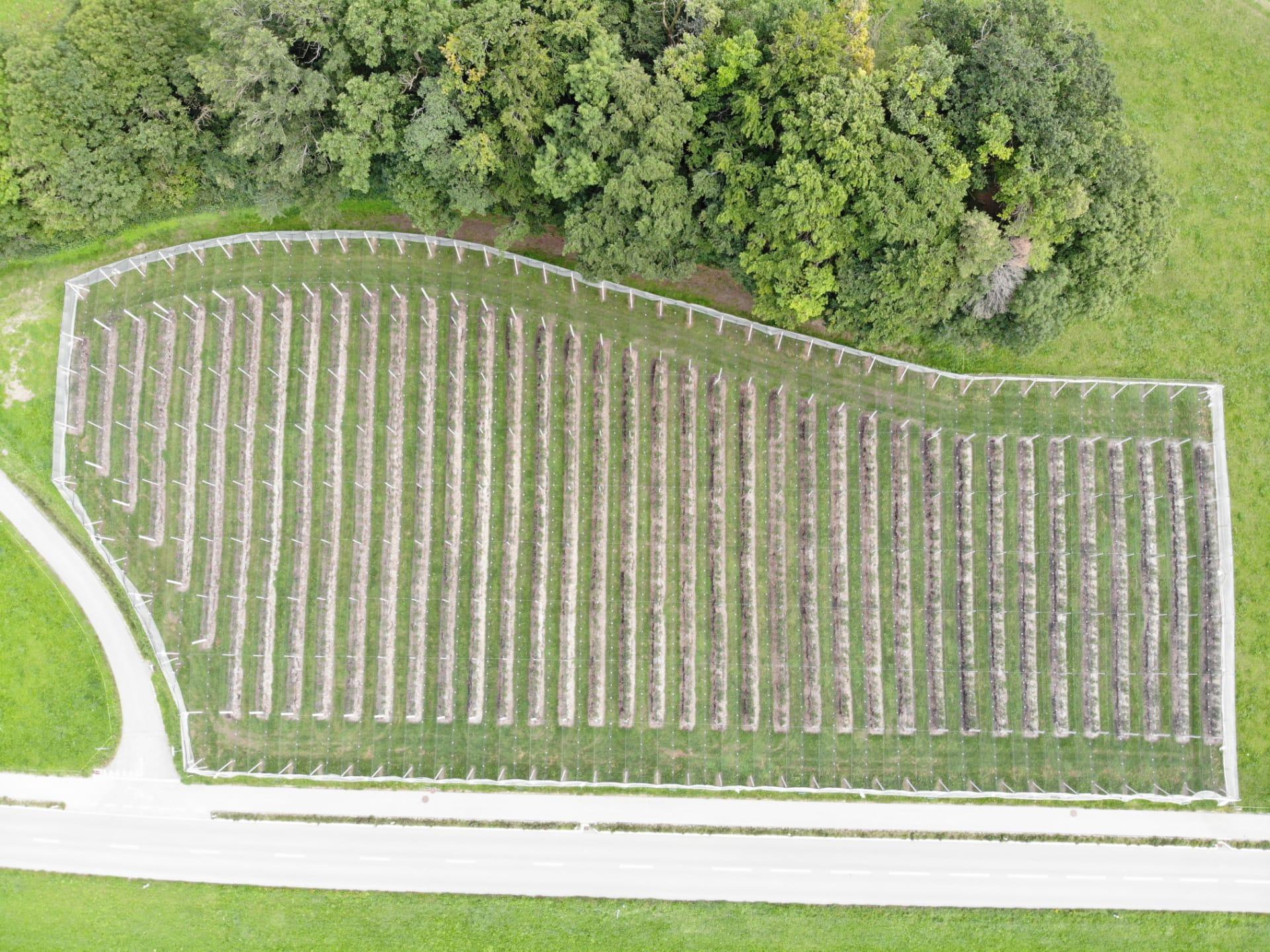 1. September 2019 Luftaufnahme von unserer Heidelbeeranlage
