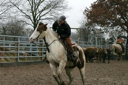 Scotty bei der Rinderarbeit 2009