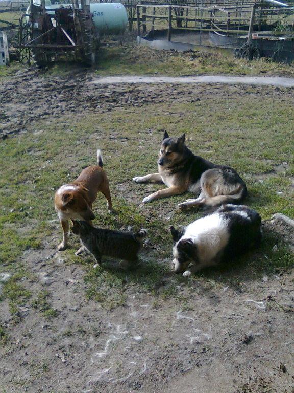 Hundehaufen mit Katze, März 2012