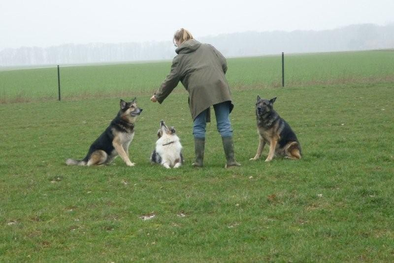 Nick, Findus und Kelly, Frühjahr 2012. Ein bisschen Erziehung....