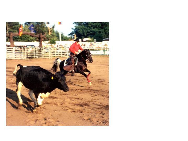 Working Cowhorse Severloh ca. 1998