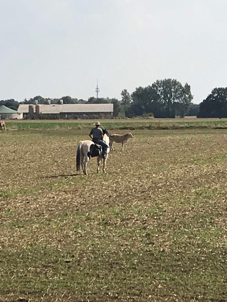 ... Ein Rind war weggelaufen. Alle haben toll mitgearbeitet und flugs war das Tier wieder eingetrieben!