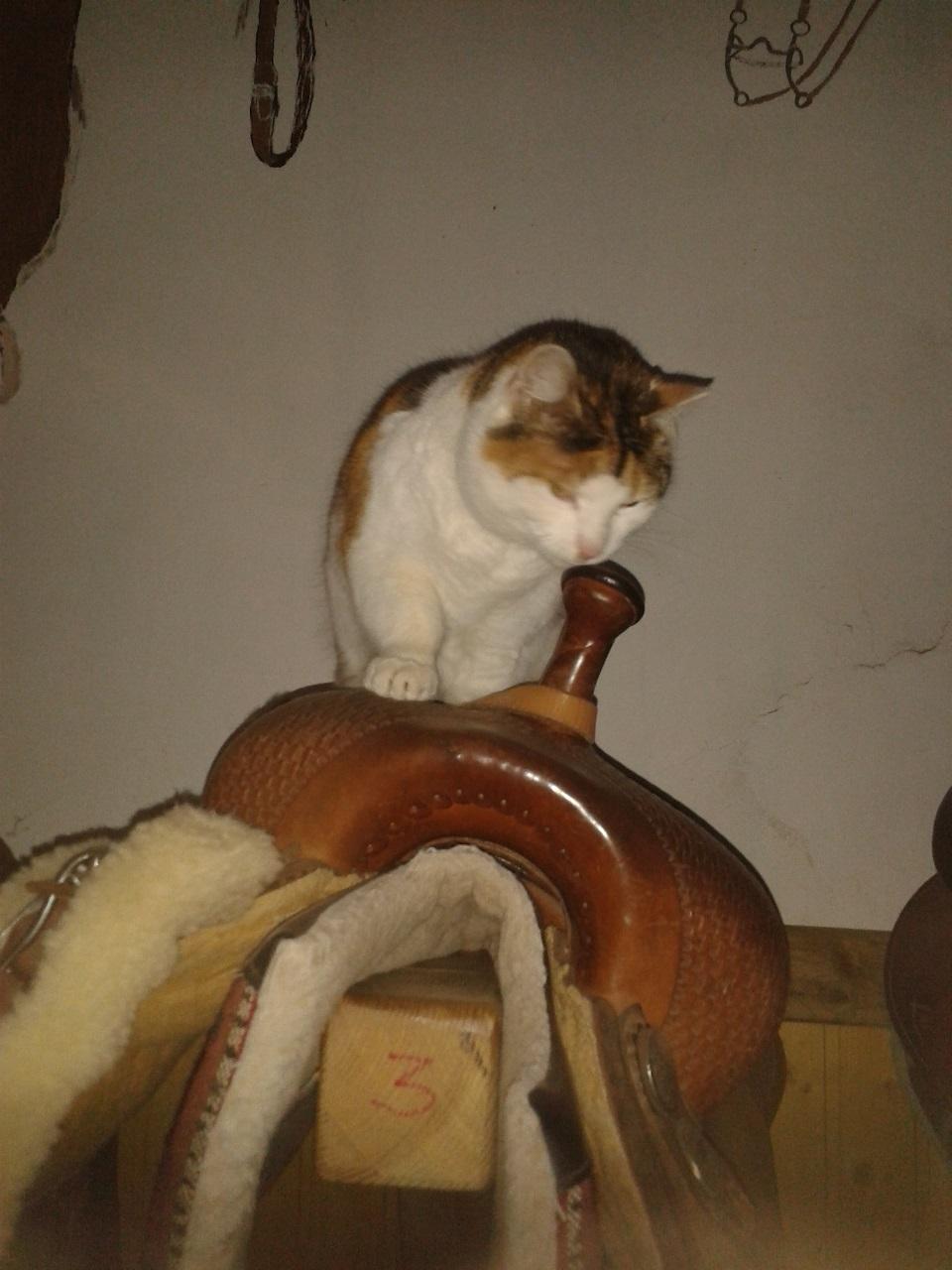Kittie bei der Sattelkontrolle.