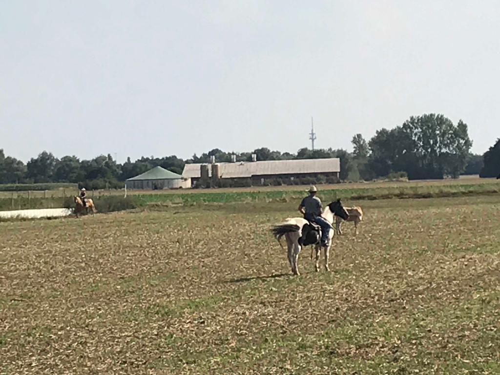 Beim Rinderarbeitskurs gab es plötzlich eine sehr reale Arbeit....