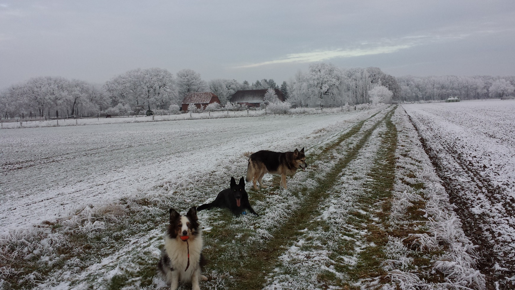 Winterspaziergang 2017