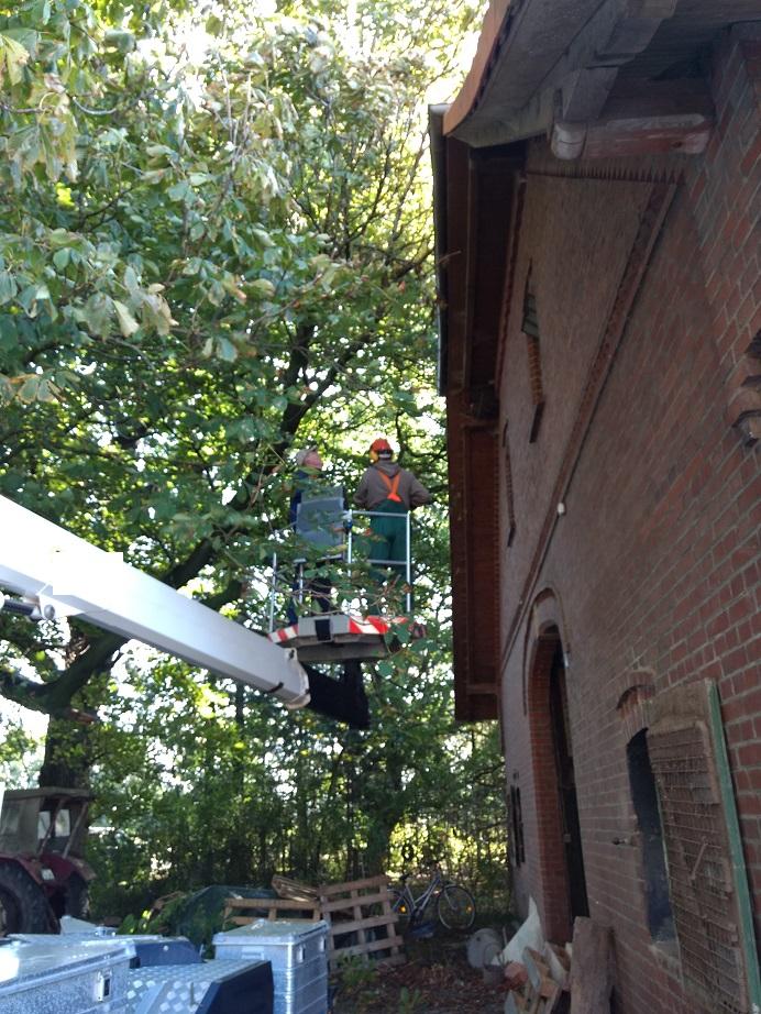 Mit dem Steiger wurden die Bäume rund ums Haus gestutzt.