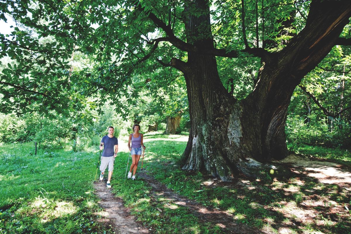 Kastanienbäume Liebing