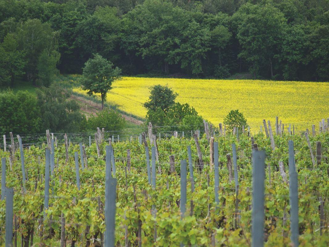 Raidinger Weingärten