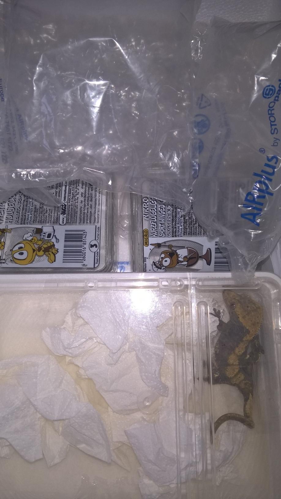 Tier fixiert in Styroporbox Detailansicht