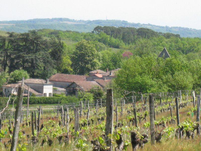Le vignoble de Buzet, aux portes de la forêt des Landes - Crédit : F. Prédonzan